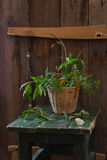 Vintage still life. With wild plants and stool royalty free stock image