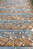 Vintage stone steps covered with fallen leaves Stock Image