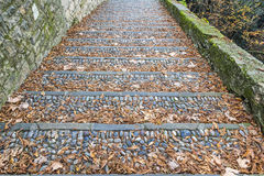 Vintage stone steps covered with fallen leaves Royalty Free Stock Images