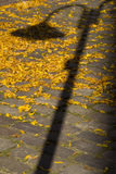 Vintage Street lamp shadow on the autumn yellow leaves Royalty Free Stock Image