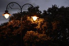 Vintage street lights at night Stock Images
