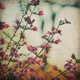 Vintage style Australian native Boronia flowers stock photography