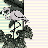 Vintage style banner with flamingo Stock Photography