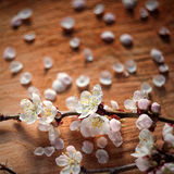 Vintage style of cherry flowers branch on wooden cracked background. With unusual helios lens swirling drawing Royalty Free Stock Image
