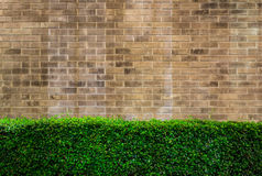 Vintage style decorative brown brick wall with plant Stock Photos