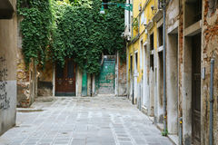 Vintage style european old architecture with vine in Venice, Italy Stock Images