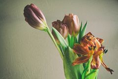 Vintage style faded bunch tulips flowers Royalty Free Stock Photo