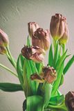 Vintage style faded bunch tulips flowers Stock Photo
