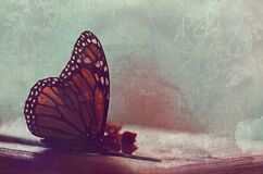 Vintage still life nature background with Monarch butterfly and dried flowers