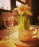 Narcis flower and glass of wather. Vintage style flowers and wather stock images