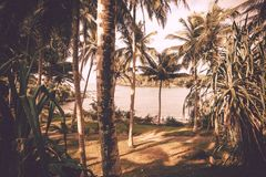 Vintage style ocean scene with calm waves, wooden grove, aloe vera and coconut trees around. Tropical landscape. At sunny weather Stock Images
