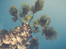 Vintage Style Palm Tree With Trunk. Retro Filtered Palm Tree Against Bright Blue Summer Sky Royalty Free Stock Photos