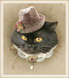 Vintage style photo of the dressed cat Royalty Free Stock Photography
