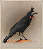 Vintage style photo of the dressed crow Royalty Free Stock Images