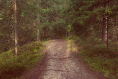 Vintage style photo of forest path Royalty Free Stock Photography