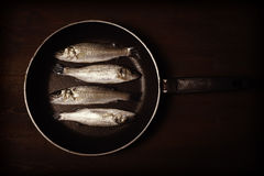 Vintage style photo, fresh fish, sea bass. Ready for cooking Royalty Free Stock Images