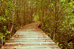 Vintage style photo of mangrove forest with wood walkway bridge and leaves of tree. Stock Photography