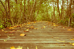 Vintage style photo of mangrove forest with wood walkway bridge and leaves of tree.Phetchaburi ,Thailand. Stock Images