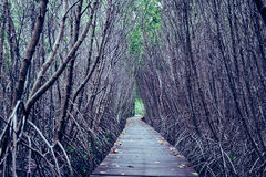 Vintage style photo of mangrove forest with wood walkway bridge and leaves of tree.Phetchaburi ,Thailand. Stock Photo
