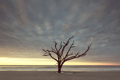 Vintage style photo of old tree near the ocean Stock Photo