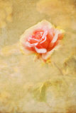 Vintage style picture of a rose stock photos