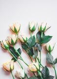 Vintage style roses royalty free stock photo