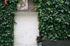 Free Vintage Style Shop With Vines Exterior In Fukuoka, Japan Stock Photography - 97065482