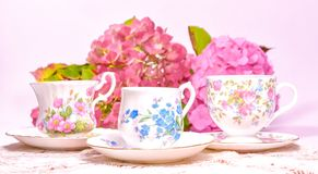 Attractive fine bone china tea cups on a pink background Royalty Free Stock Photo