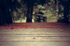 Vintage style wooden floor in tropical forest with blurred background Royalty Free Stock Images