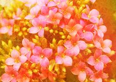 Vintage styled floral picture Stock Photography