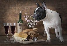 Vintage styled photo of French bulldog indoors Royalty Free Stock Photo