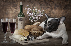 Vintage styled photo of French bulldog Stock Images
