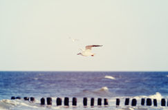 Vintage stylized birds flying over sea, shallow depth of field. Vintage stylized birds flying over the sea, shallow depth of field Royalty Free Stock Photography
