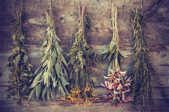 Vintage stylized photo of bunches of healing herbs stock photography