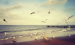 Vintage stylized picture of birds at a beach.  Royalty Free Stock Photo