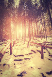 Vintage stylized sunset in mysterious forest. Stock Images