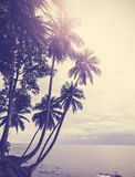 Vintage stylized tropical beach with palm tree at sunset Royalty Free Stock Photography