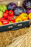 Vintage suitcase with fresh organic vegetables Royalty Free Stock Photos