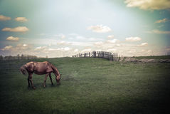 Vintage summer landscape with horse at pasturage Royalty Free Stock Photography