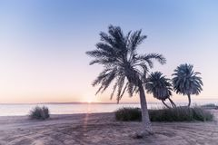 Vintage summer landscape with palms royalty free stock photography