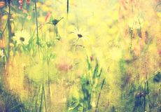 Vintage summer meadow Royalty Free Stock Photography