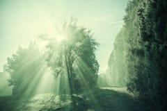 Vintage Sun Rays Through The Tree Stock Photography