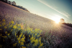 Vintage Sunset. A golden sun about to set over a field of grain Stock Photos