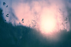 Vintage sunset blurry meadow Stock Image