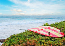Vintage surfboard on a green bush Royalty Free Stock Image