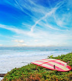 Vintage surfboard on a green bush Royalty Free Stock Images