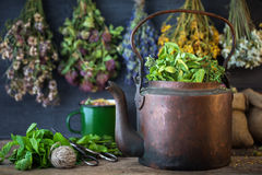 Vintage tea kettle and and hanging healing herbs. Stock Photos