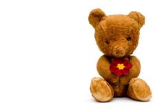 Vintage teddy with red flower. Vintage teddy bear holds a red primrose flower Stock Photos