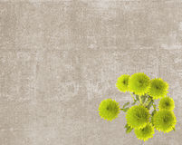 Vintage texture with green button mums Stock Photography