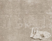 Vintage texture with white goatling Royalty Free Stock Image